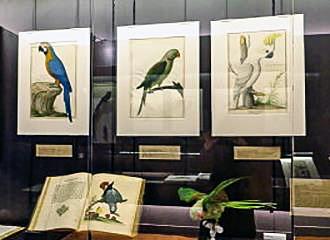 The cabinet d histoire du jardin des plantes museum in paris france - Pont du jardin des plantes ...
