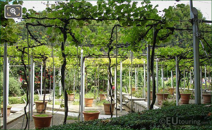 Jardin De La Treille Terracotta Pots
