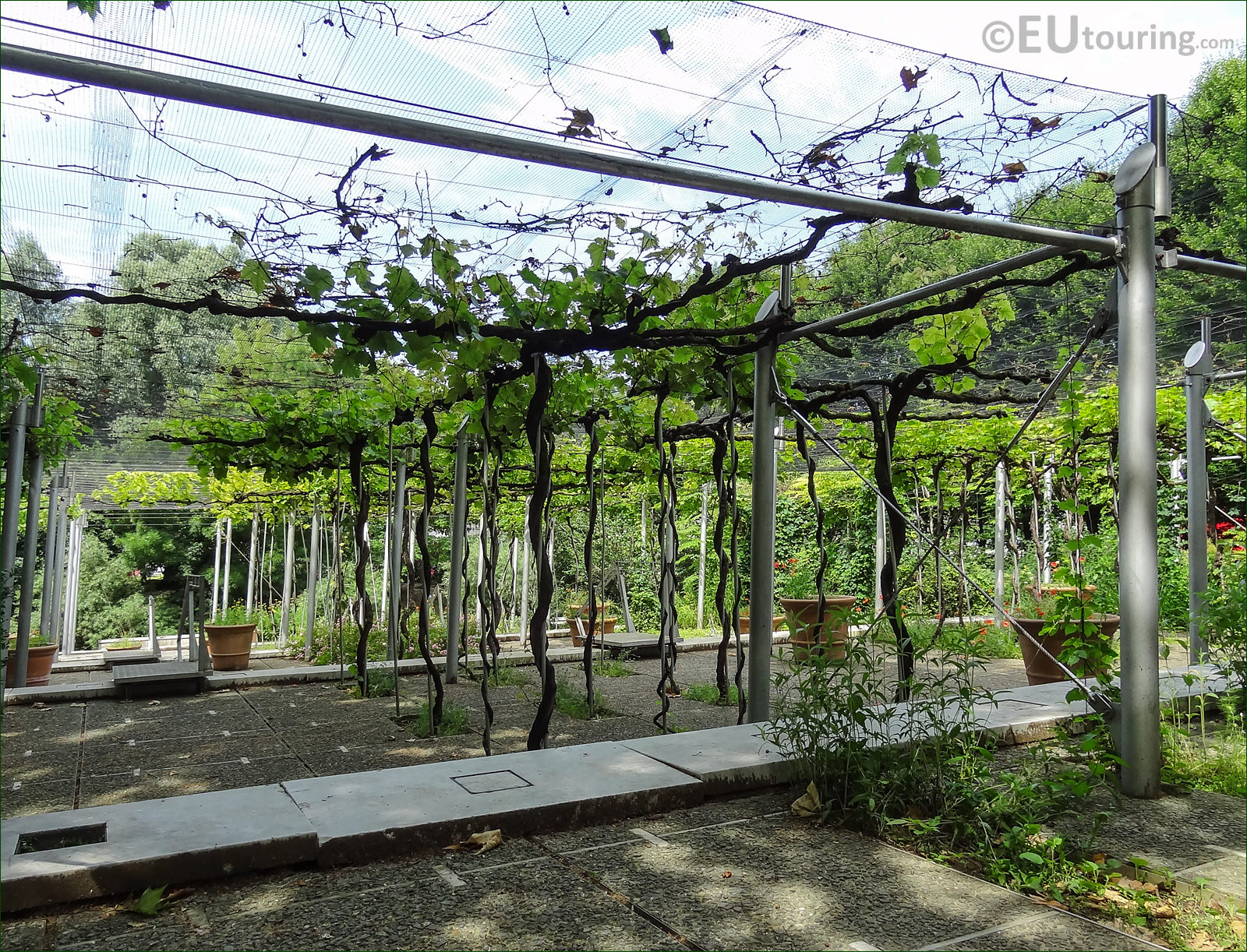Hd photos of jardin de la treille vineyard inside parc de for Jardin winery