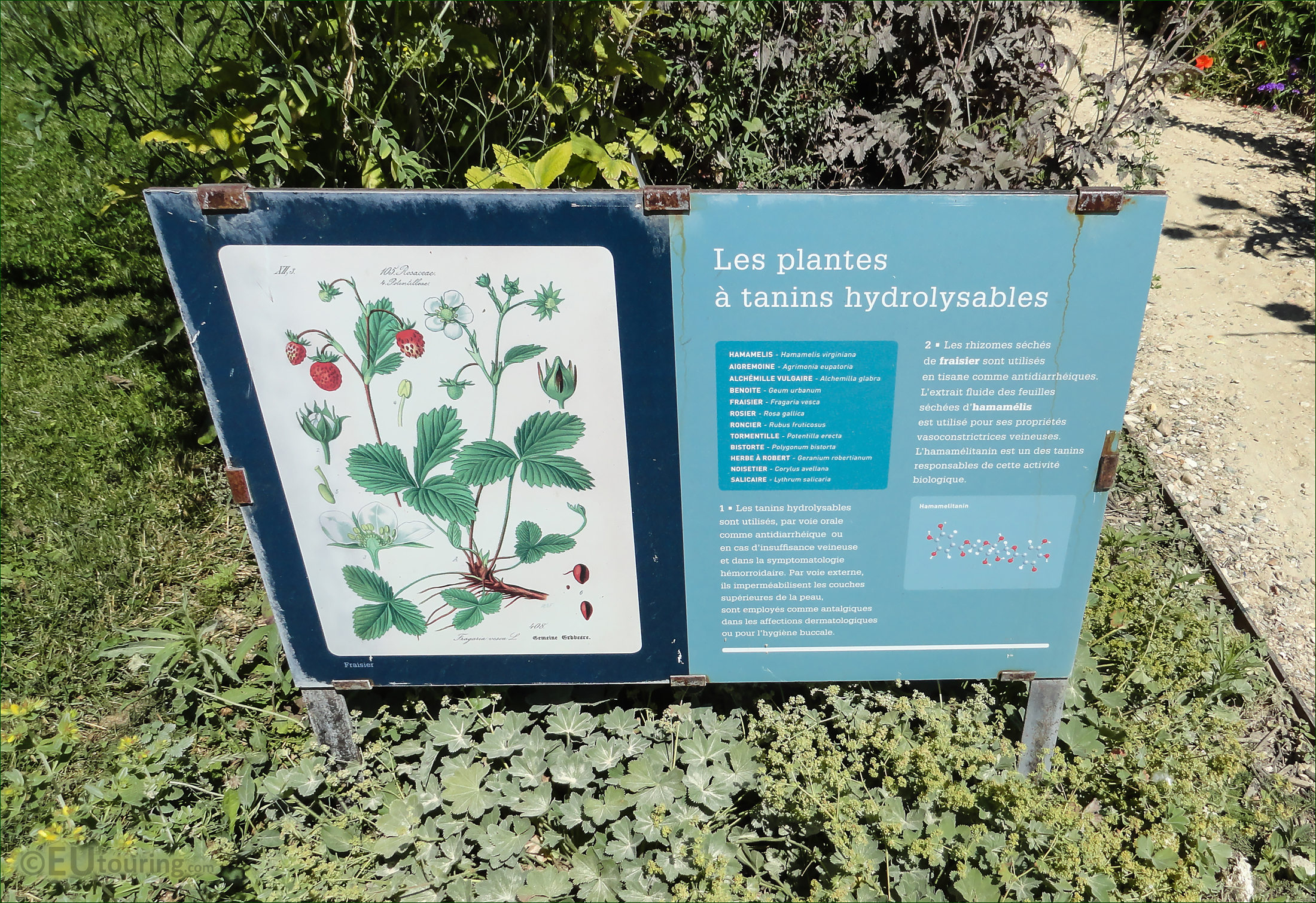 Hd photographs of jardin des plantes in paris france for Plantes jardins