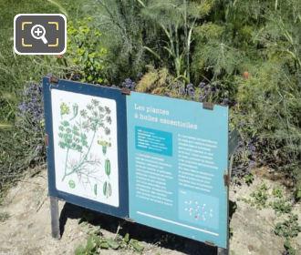 Essential Oils Jardin Des Plantes