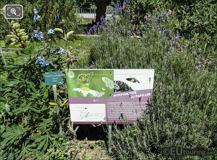 Information Board On Morphology Of Butterflies