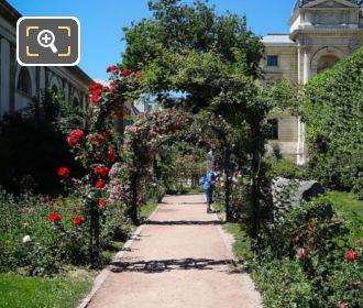 Red Roses Inside Jardin Des Plantes