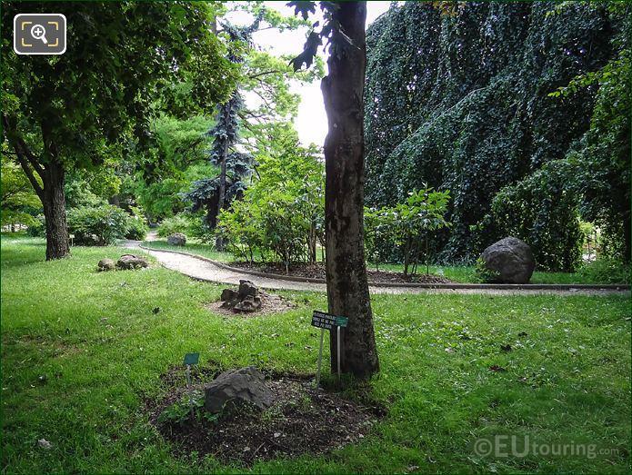 Esplanade Lamarck Pathway Jardin Des Plantes