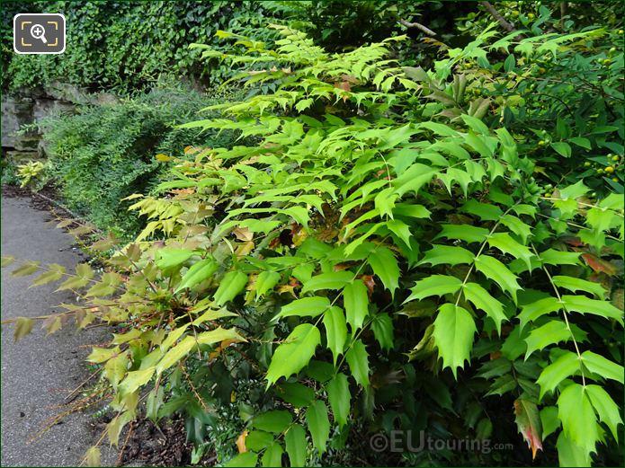 Jardins Du Trocadero Evergreen Ground Foliage