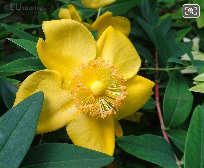 Macro Of Yellow Flower Inside Jardins Du Trocadero