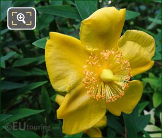 Marco Of Anemone Flower Inside Jardins Du Trocadero