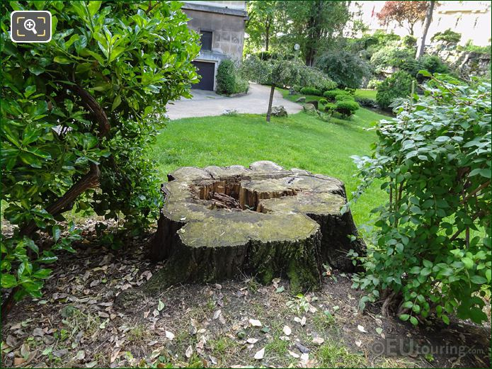 Tree Trunk Within Jardins Du Trocadero Looking South Easterly