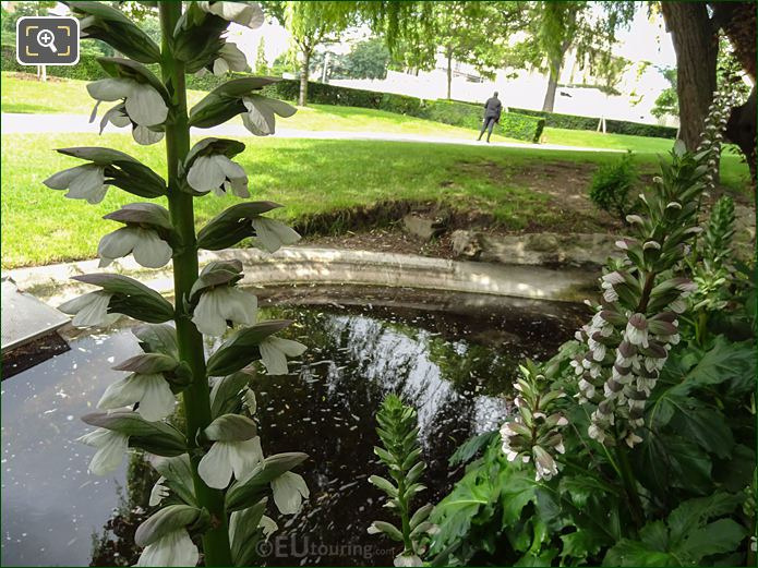 Acanthus Flowers Inside Jardins Du Trocadero