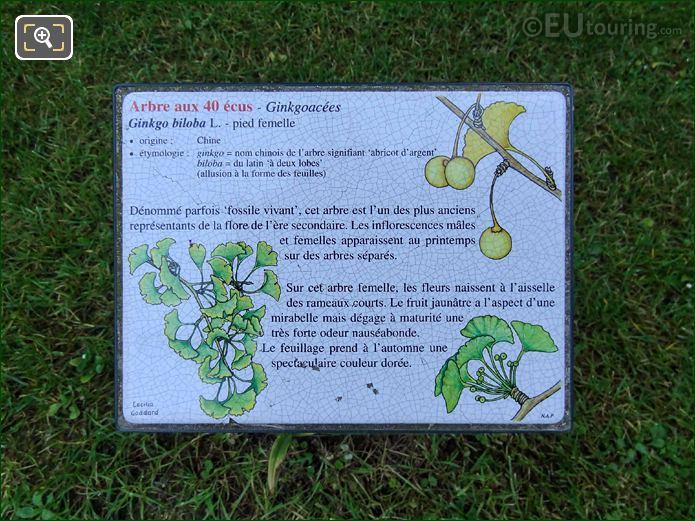 Jardin Du Luxembourg Ginkgo Biloba Tourist Info Board