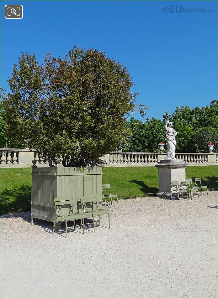 Pot 29 With Punica Granatum Flore Pleno Tree Jardin Du Luxembourg