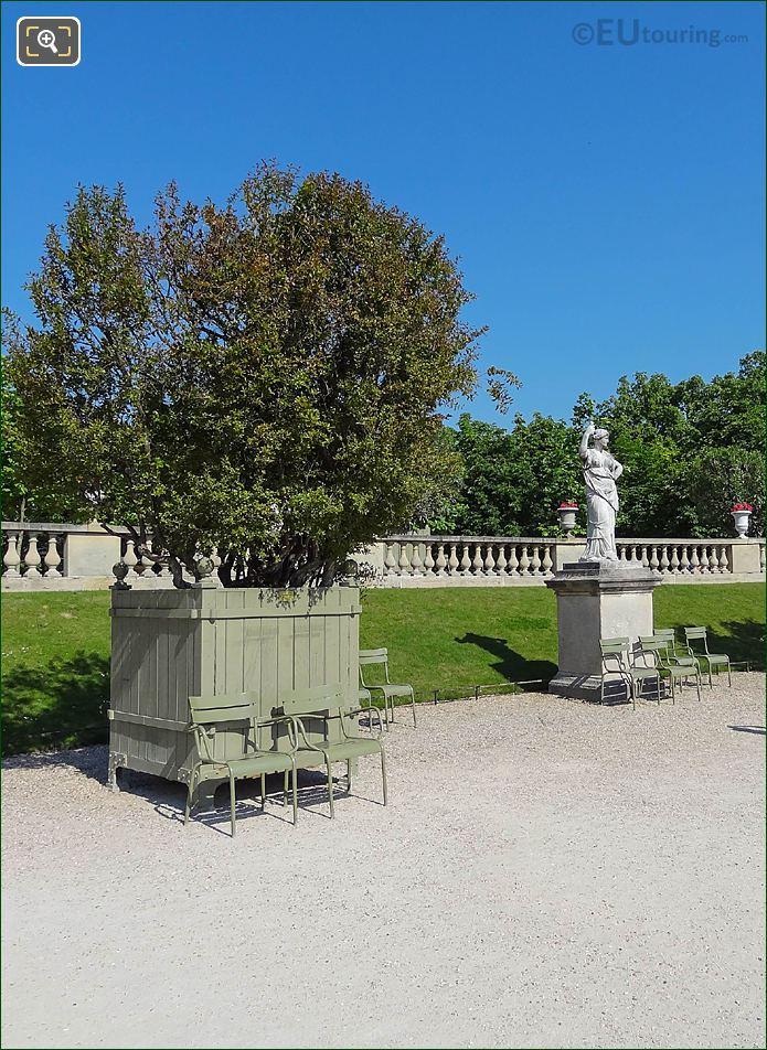 Pot 29 With Punica Granatum Flore Pleno Tree Jardin Du Luxembourg