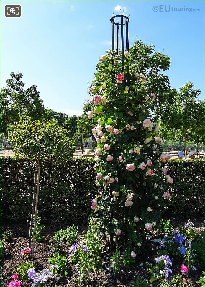 Climbing Roses In Jardin De La Roseraie Of Jardin Du Luxembourg
