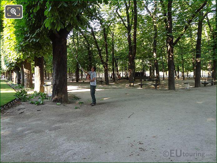 Gardener Tree Pruning In Jardin Du Luxembourg