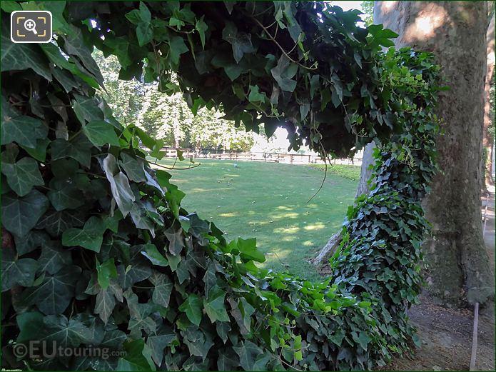 Fontaine De Medici Hanging Ivy Garland In Jardin Du Luxembourg