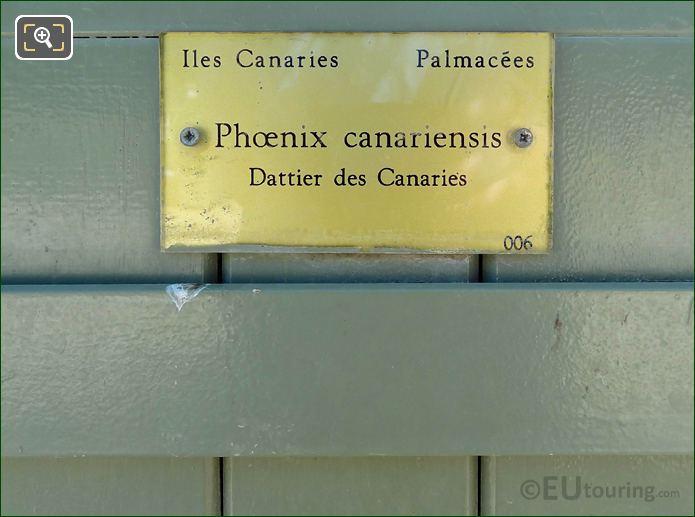 Phoenix Canariensis Information Plaque On Pot 006