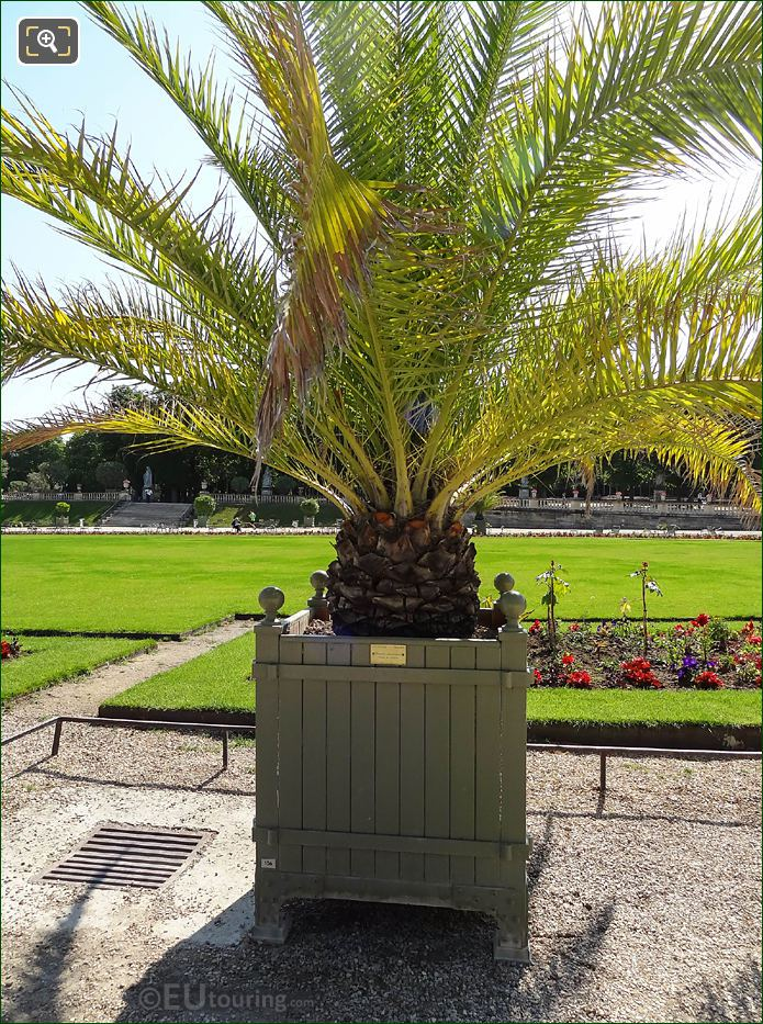 Plant Pot 006 With Canary Island Date Palm In Jardin Du Luxembourg