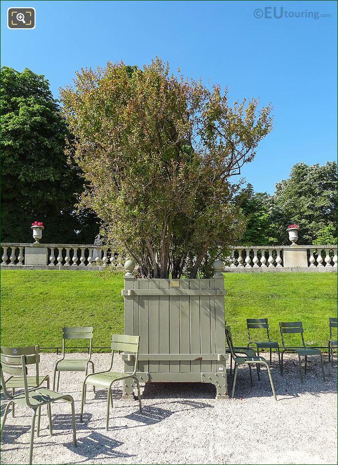Pot 36 Flowering Pomegranate Tree Jardin Du Luxembourg