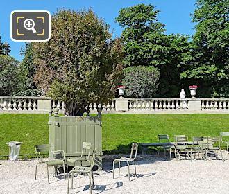Pot 41 Punica Granatum Flore Pleno Jardin Du Luxembourg
