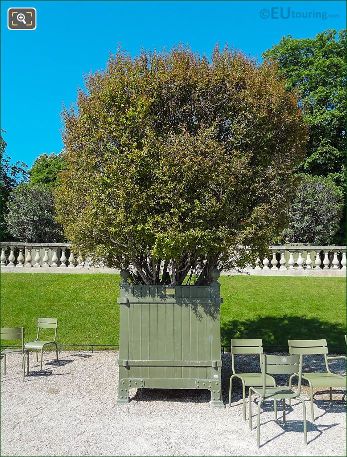 Pot 27 With Pomegranate Tree In Jardin Du Luxembourg