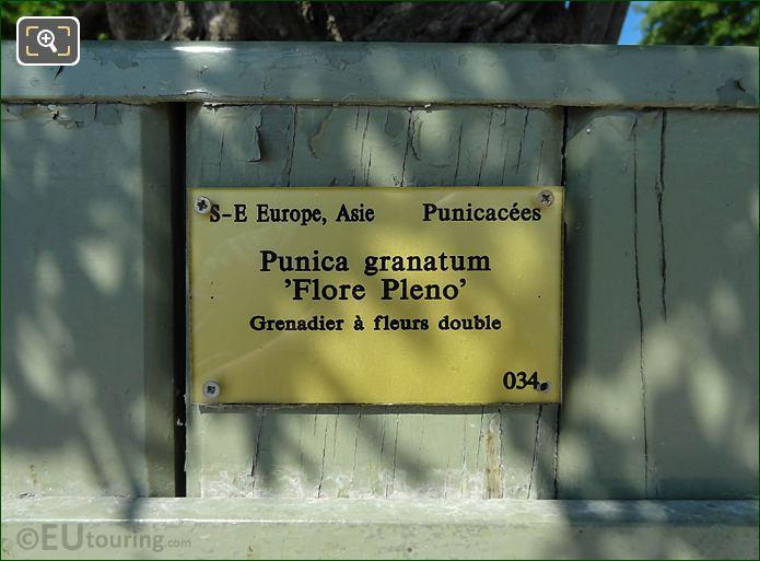 Tourist Information Plaque Pot 34 With Pomegranate Tree