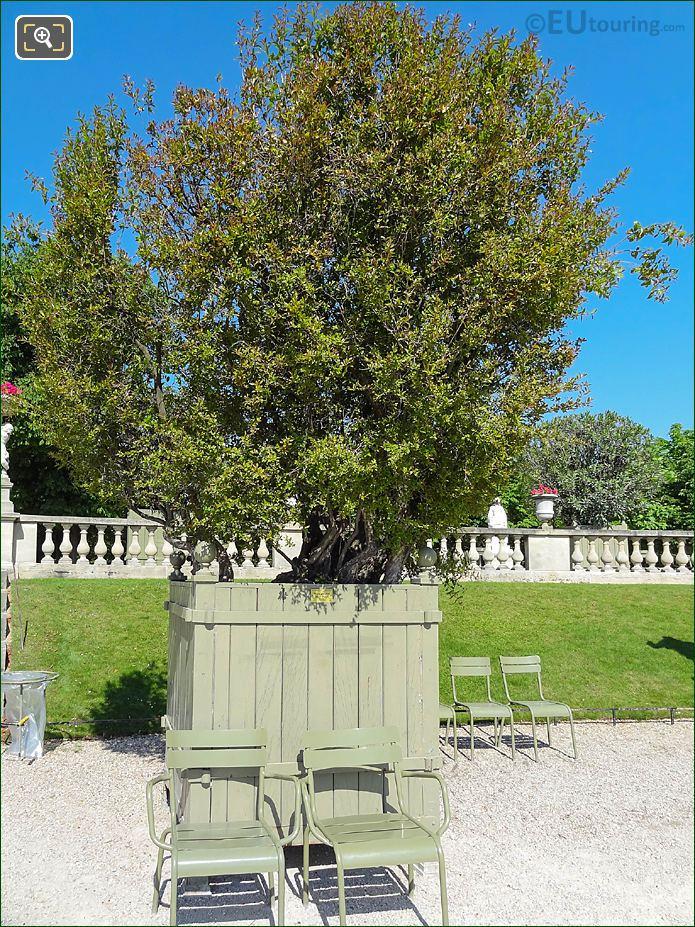 Pot 29 Double Flowering Pomegranate Tree Jardin Du Luxembourg