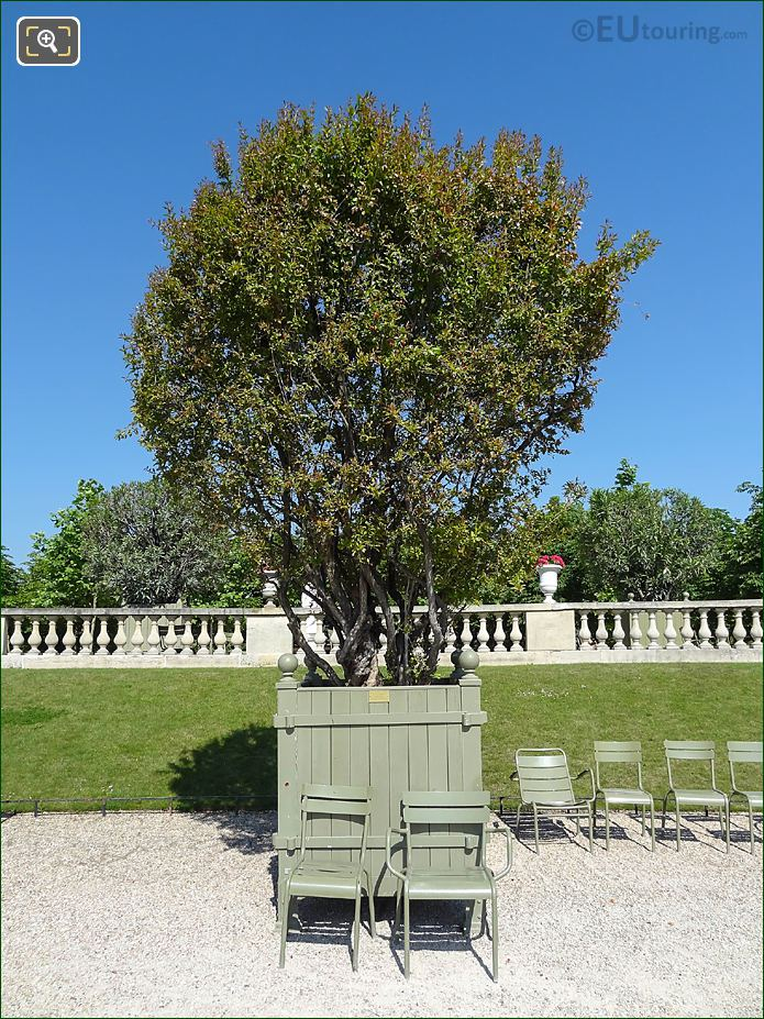 Pot 32 With Pomegranate Tree In Jardin Du Luxembourg