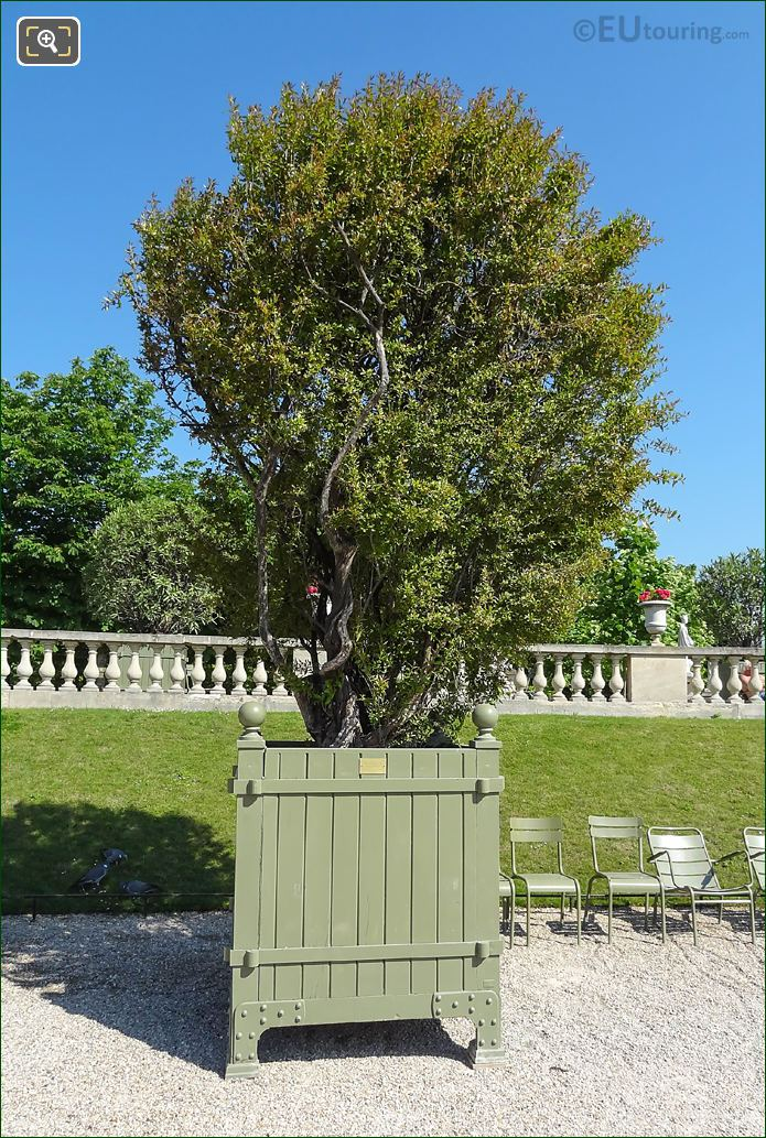 Luxembourg Gardens Green Garden Pot
