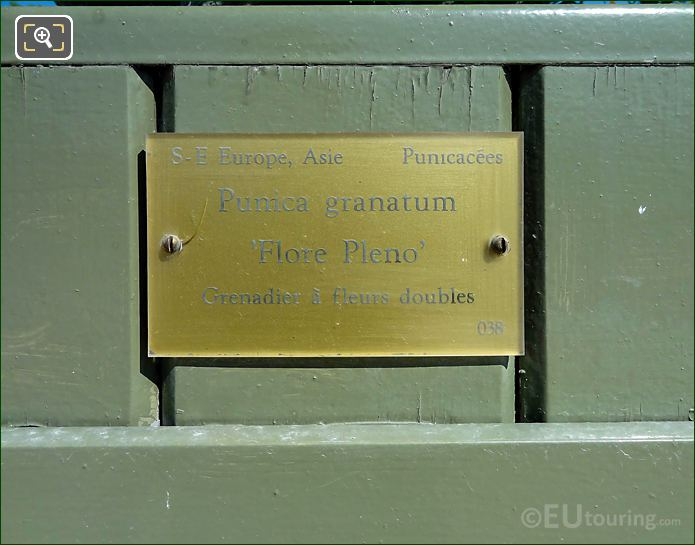 Tourist Information plaque On Pot 38 With Pomegranate Tree