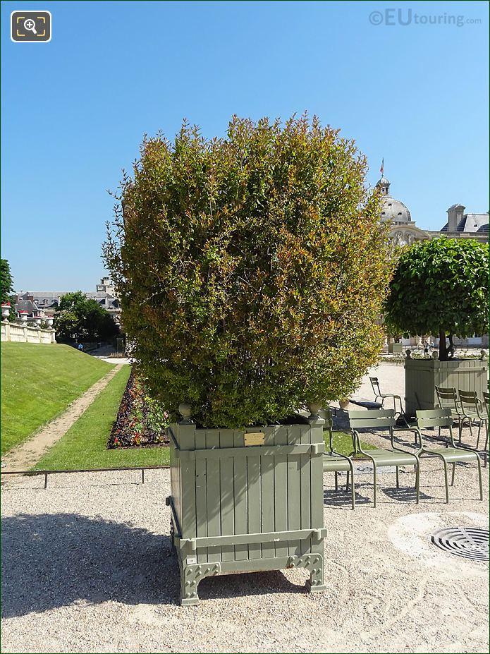Pot 49 Flowering Pomegranate Tree In Jardin Du Luxembourg