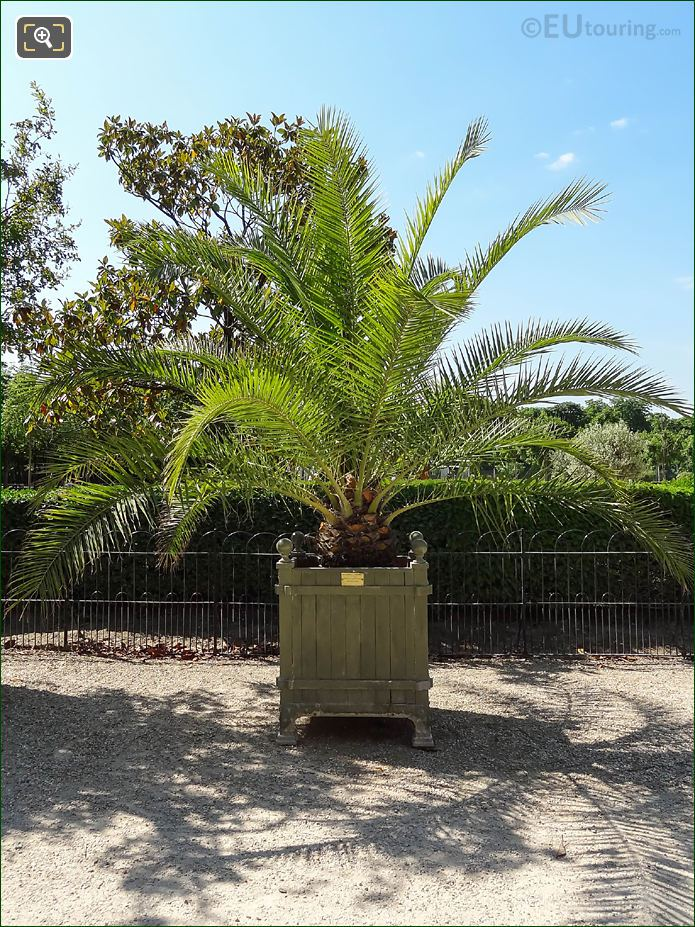 Pot 210 With Date Palm Tree In Jardin Du Luxembourg