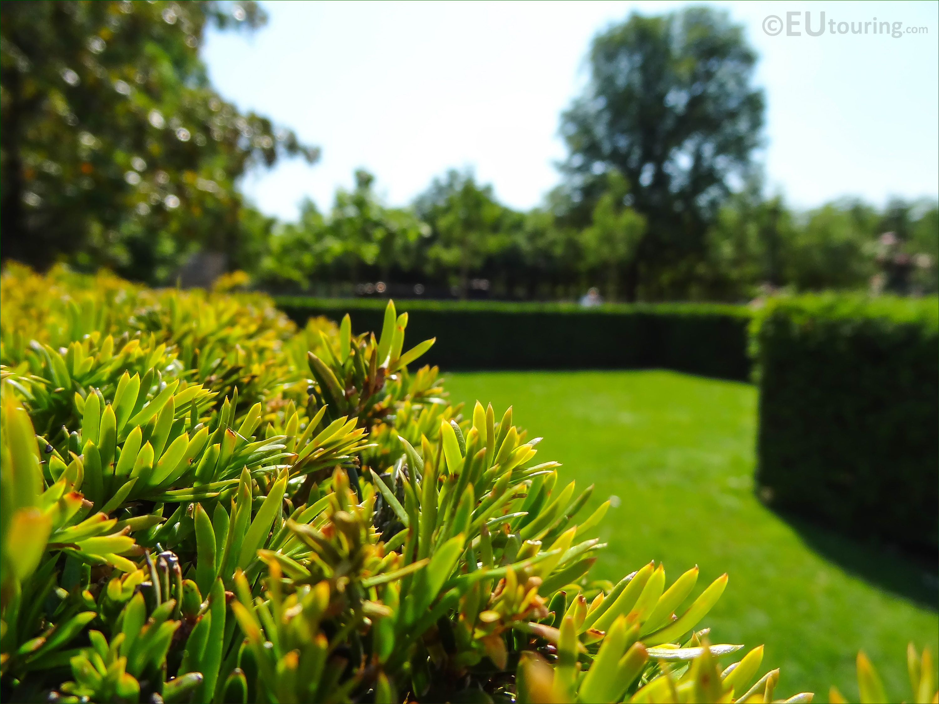 Photos of historical Rose Garden in Jardin du Luxembourg - Page 9