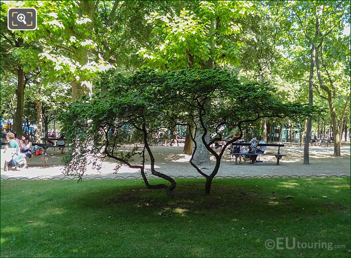 Acer Trees In Jardin Du Luxembourg