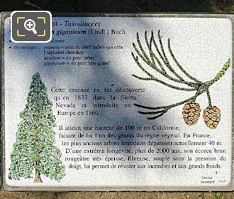 Jardin Du Luxembourg Tourist Info Plaque For Giant Redwood