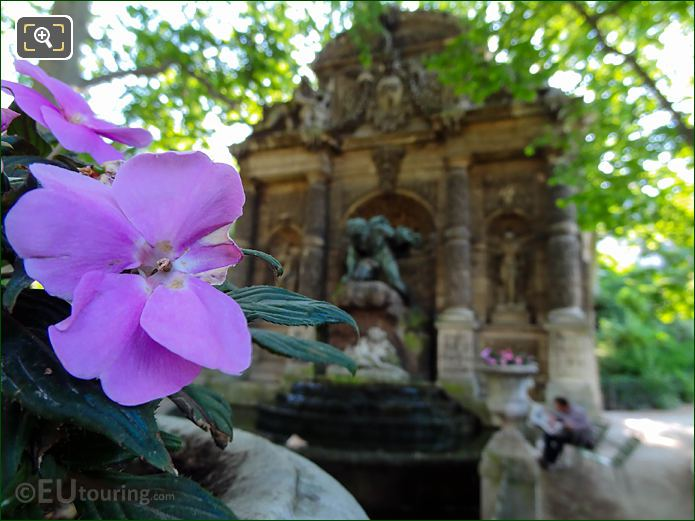 Purple Pansies At Medici Fountain In Jardin Du Luxembourg