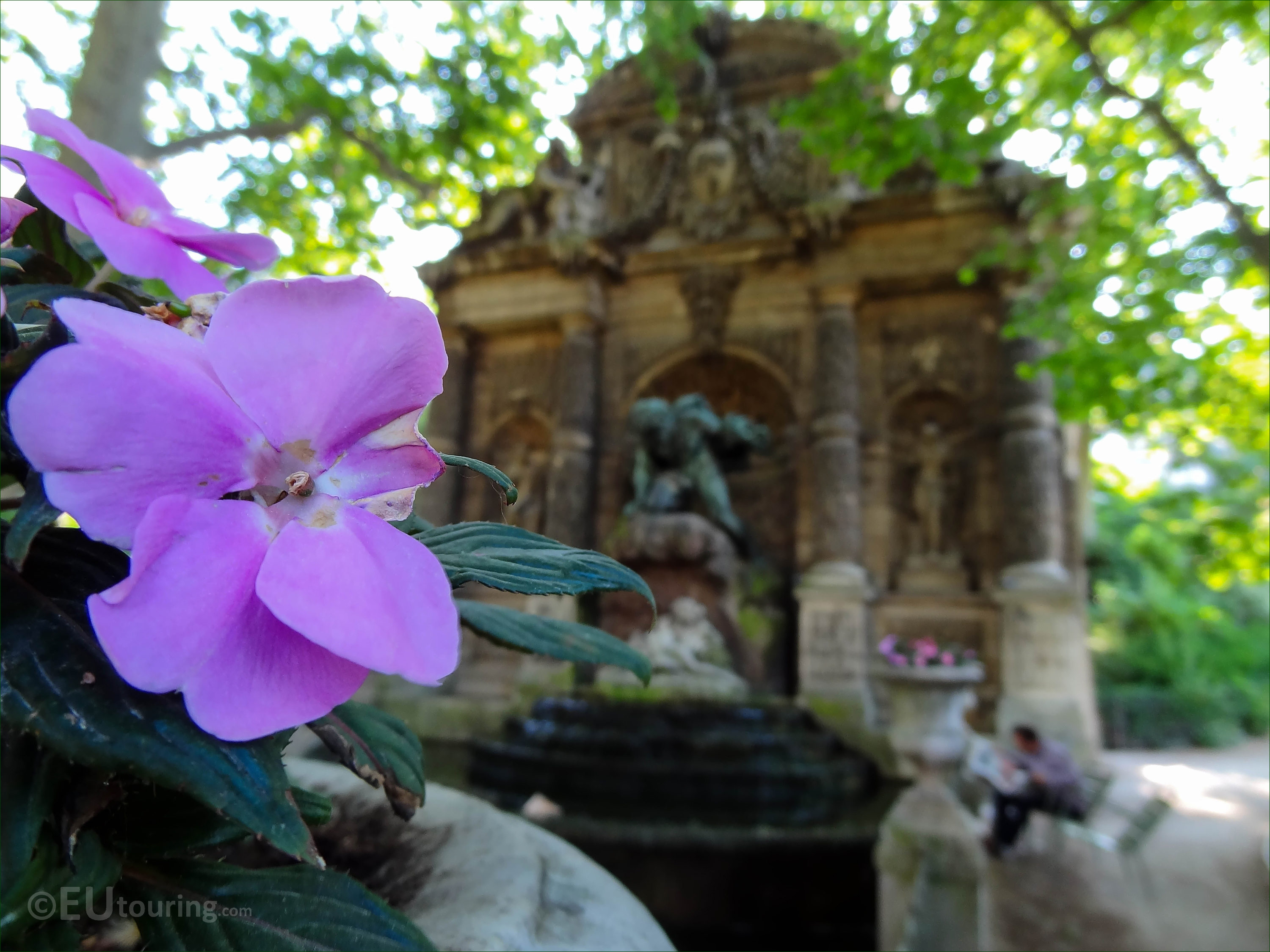 Photos Of Different Flowers Inside Jardin Du Luxembourg Page 16