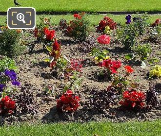 Flowering French Garden Flowerbed In Jardin Du Luxembourg