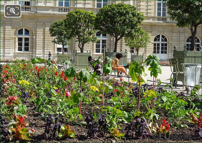 Bedding Plants And Flowers In Jardin Du Luxembourg