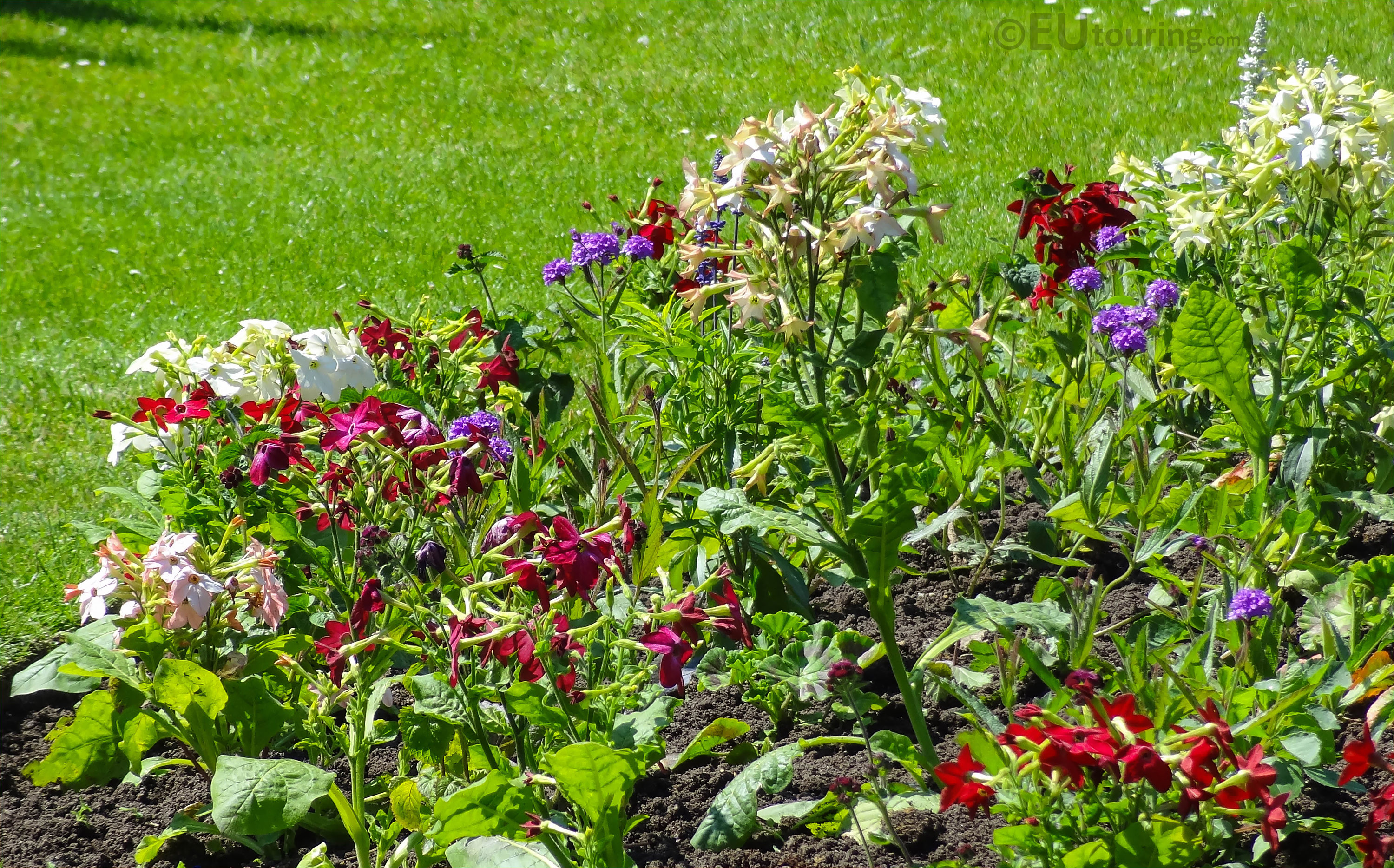 Red Purple White And Pink Bedding Plants In Luxembourg Gardens