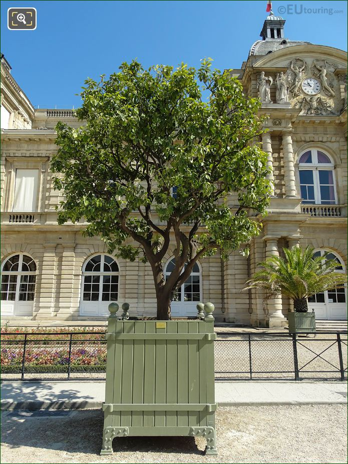 Pot 129 With 250 Year Old Sweet Orange Tree Jardin Du Luxembourg