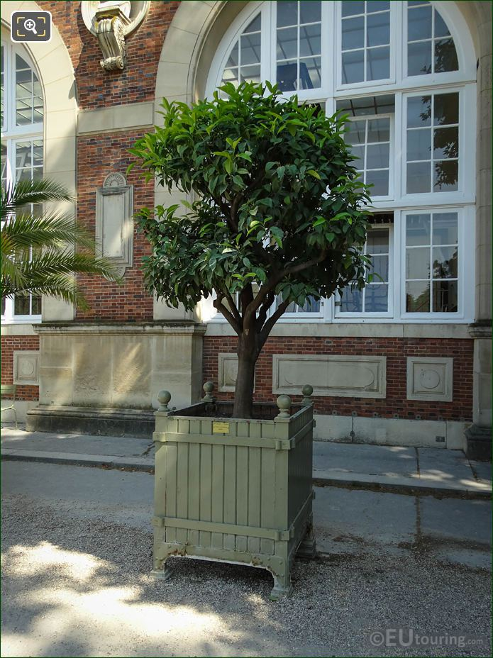 Pot No 115 With Bitter Orange Tree In Jardin Du Luxembourg