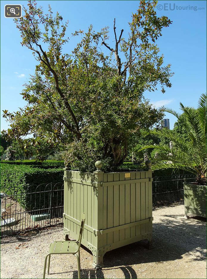 Plant Pot No 40 With Pomegranate Tree In Jardin Du Luxembourg
