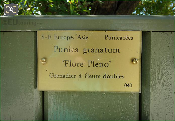 Information Plaque On Plant Pot No 40 In Luxembourg Gardens