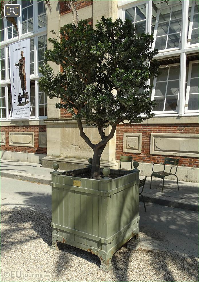 Pot 126 With Myrtle Leaf Orange Tree Jardin Du Luxembourg