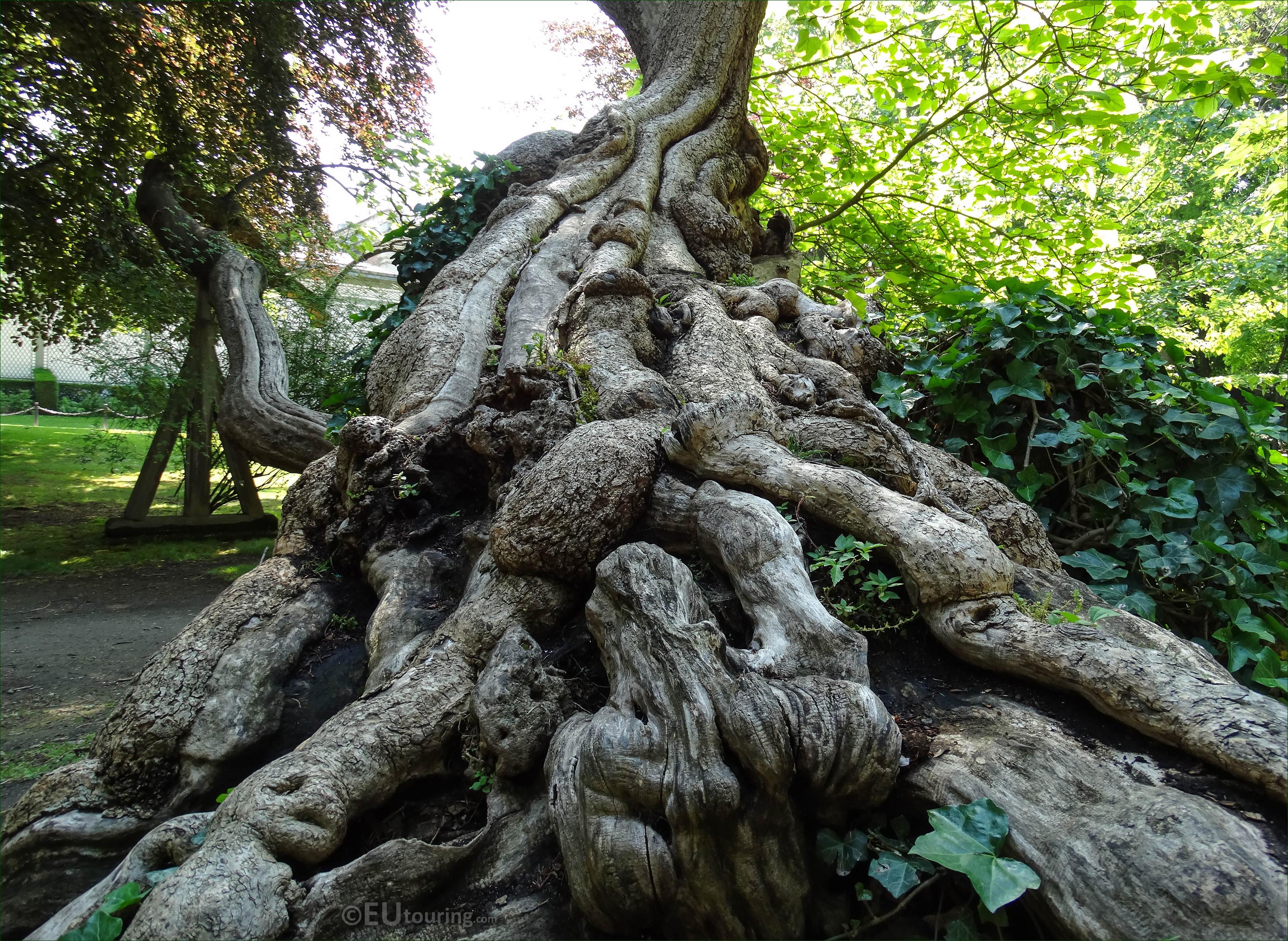 Photos of jardin du luxembourg public gardens in paris for Au jardin du luxembourg