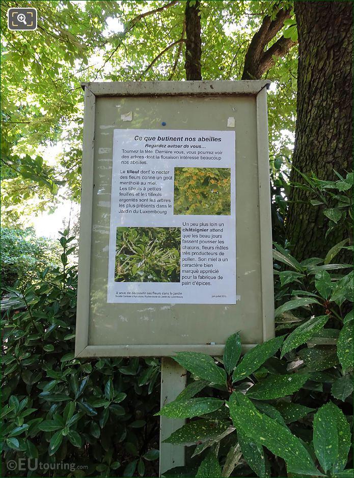 Information Board On Linden Flowers In Jardin Luxembourg
