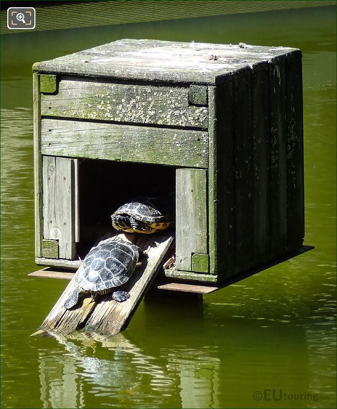 Parc De Bercy Turtles
