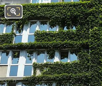 Ivy Covering Corner Of Centre Cassin On Rue Cassini
