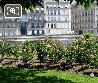 Square de L'Ile-de-France Roses