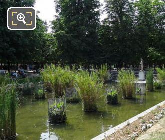 Jardin Des Tuileries South Pond With Venus Callipyge Statue